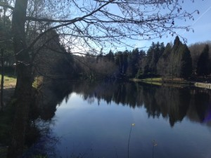 Lago Castiñeiras Cotorredondo